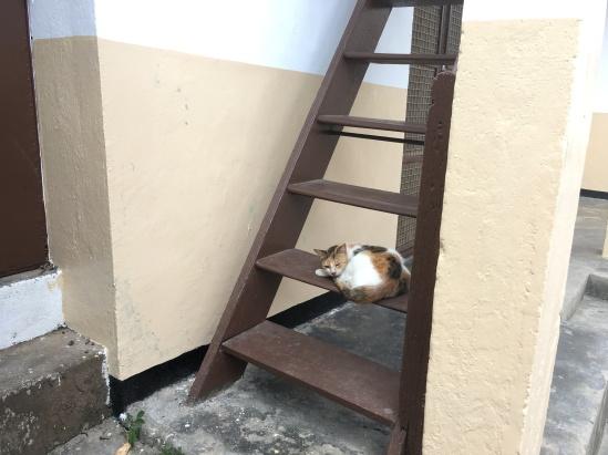 Cats of Zanzibar