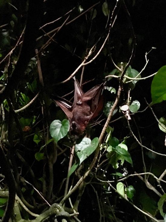 Bat Display