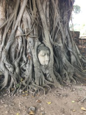 There are many headless Buddha in these ruins - no one is sure how this head wound up as part of this tree.