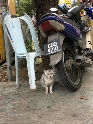 Cats of KL