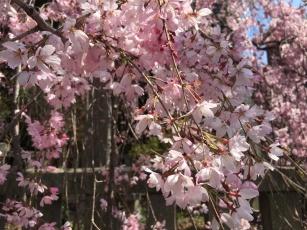 More Blossoms