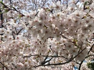 Even More Blossoms